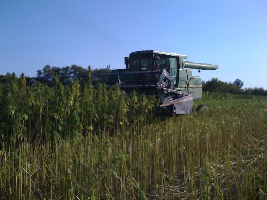 Hemp Grain Harvest